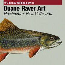 Duane Raver Freshwater Fish Collection